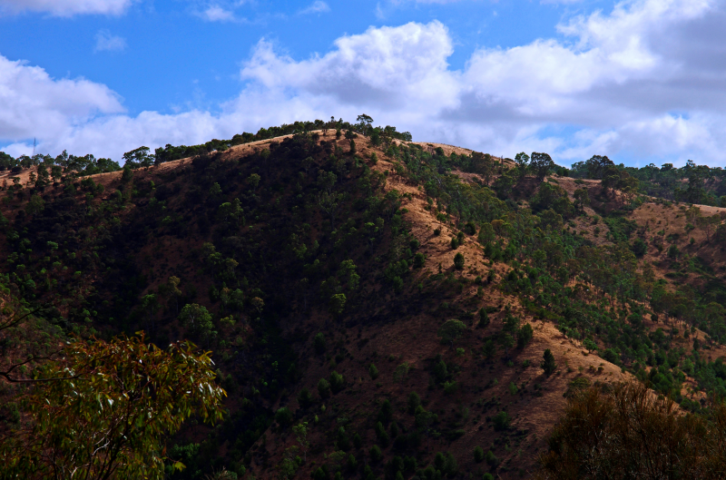 Bushwalk australia view topic landscape january 2013 for Adelaide hills landscape